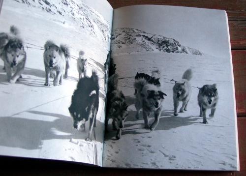 frison-roche,pierre tairraz,peuples chasseurs de l'arctique,arctique,aventures,témoignages,vie sauvage,eskimos,grand nord